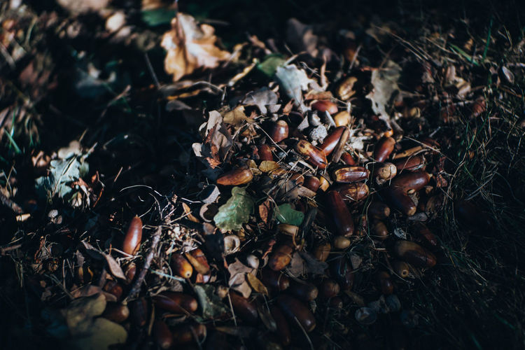 High Angle View Of Fallen Nuts And Leaves In Forest