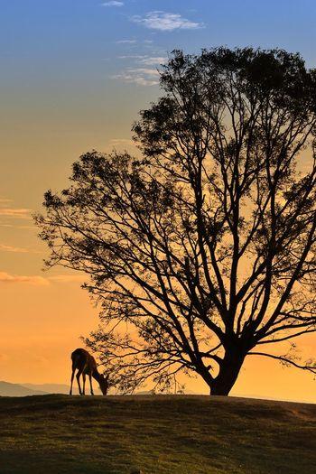 奈良市 若草山 EyeEm Gallery EyeEmNewHere EyeEm Selects EyeEm Best Shots Sky Tree Plant Sunset Silhouette Mammal Nature Animal Themes