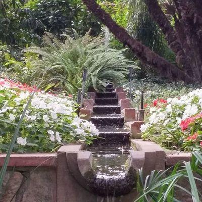 Water Agua Vetta Eau Garden Jardin Puutarha Flowers Kukkia Flores Fleurs UB UniversitatdeBarcelona Bcndreamers Bcnexploradores Bcnexplorers Thebarcelonist