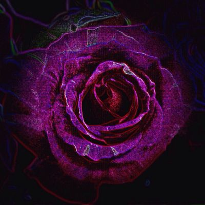 Electric Rose 💜 Playing With Effects Close-up Purple Flower Beauty In Nature Nature Full Frame Still Life High Angle View Indoors