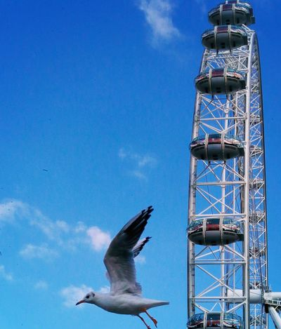 Bird Eye London Eye Sky Animals In The Wild Animal Wildlife Architecture Built Structure Nature Animal Flying Bird One Animal Blue Low Angle View Tall - High Day No People Outdoors Cloud - Sky