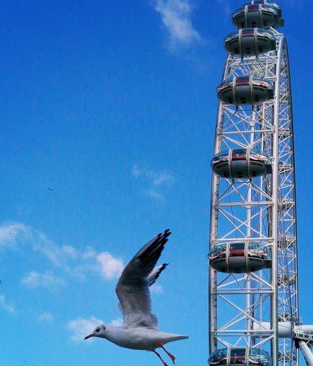 Bird Eye London