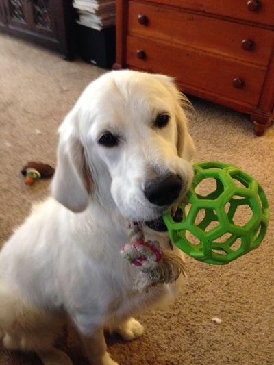 Frieda at play.