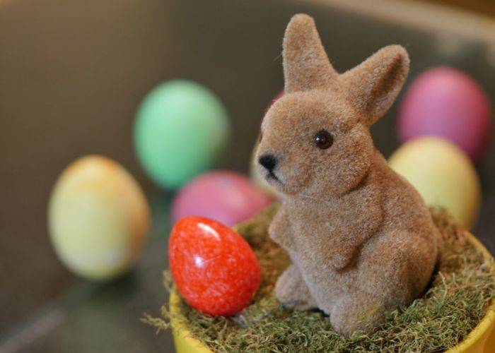 Close-Up Of Easter Bunny And Eggs At Home