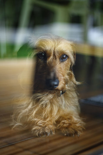 Close-up portrait of dog seen through window