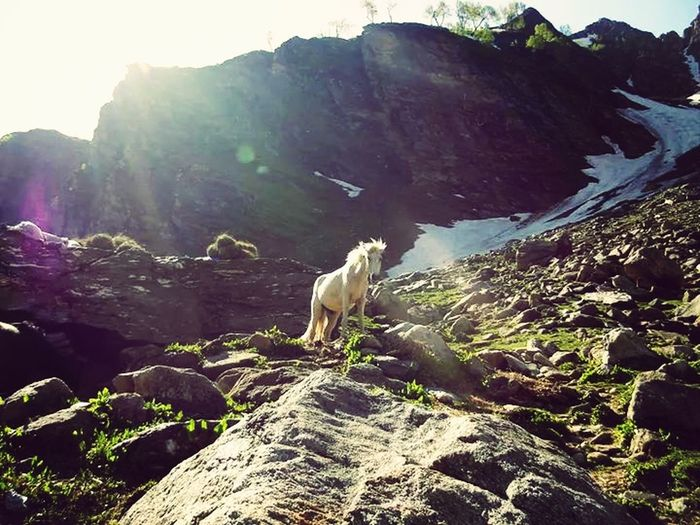 Manali @htc Horse From The Heaven