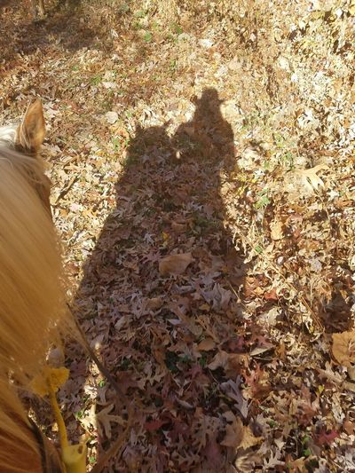 Shadow of a cowgirl Shadow Autumn Leaf Day Nature Real People One Person Animal Themes