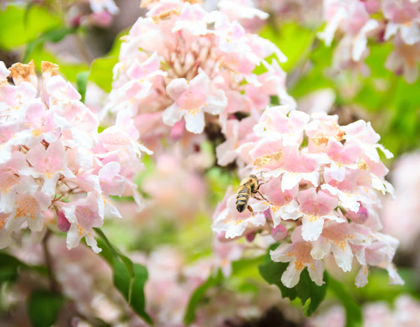 The flowers and the bee Animals In The Wild Bee Bloom Blooming Blossom Fiori Flower Flowering Flowers Garden Garden Photography Insect Nature One Animal Petal Pink Color Plant Prime