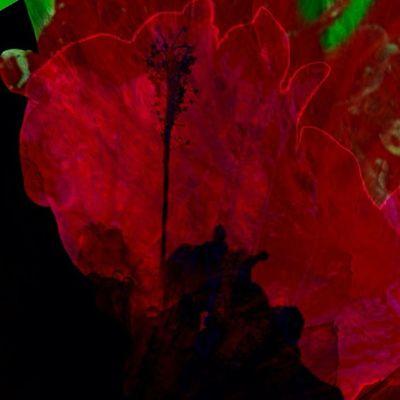 Temptations in Crimson (3 of 3) Dhexpose Instamasters All_shots Ace_ Gang_family Deadlydivas Unitedbyedit Deadlydivas_edits Amselcom Ig_outkast Mobileartistry Ig_one Primeshots Edit2gether Instauno Stunning_pics7 Igsg Icatching Bd Femme_elite Master_pics Onlythe_femme Ig_captures Hdr_femme Ig_artgallery Weareinheaven Editsrus You_nique_edits Bestinstagramart Mi55flowerz