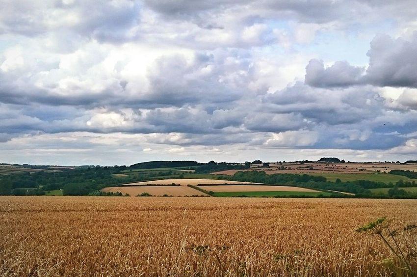 Fieldscape Fields Fields Of Gold Landscape Landscapes Nature Outdoor Photography Ruralscenes Beauty In Nature EyeEm Gallery
