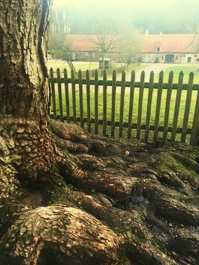 VeryOldTree Monestery Chorin Roots Fence