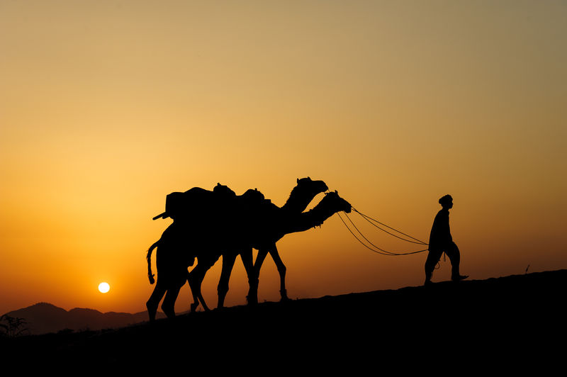 Silhouette Man Walking With Camels Against Clear Sky During Sunset