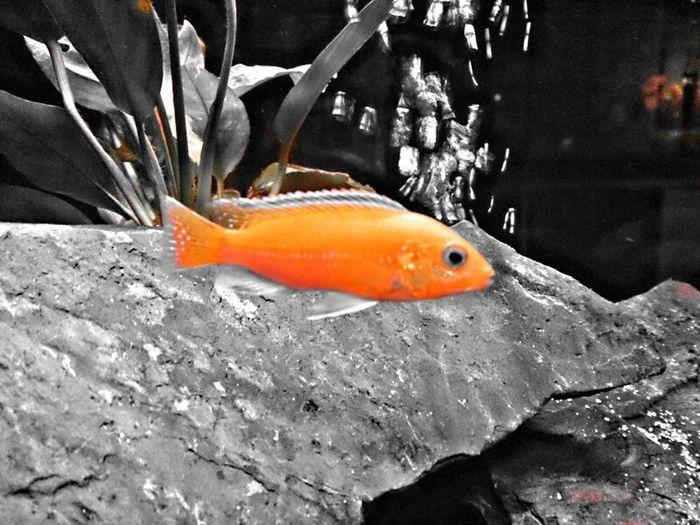fish Labido tank Aquarium