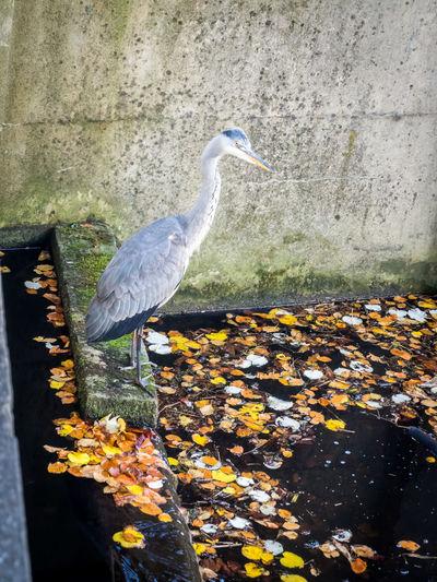 High angle view of bird on lake