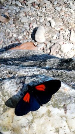 Natural Mountain Beauty In Nature Nature Butterfly - Insect