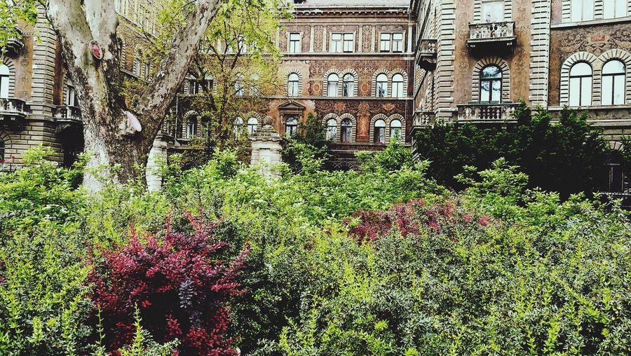 ❤️💚🌿🌱🌳 Outdoors Plant Architecture Tree Grass Shrub Leaf Bush Green Leica Lens Downtown Urban Jungle Plants Urban Garden Budapest VSCO Freshness Neorenaissance