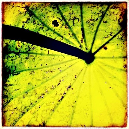 Hipstamatic Plants Swakolab Interesting Pieces