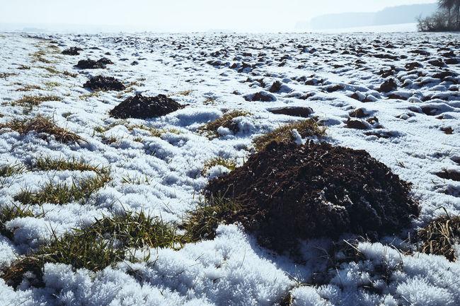 Sunday winter walk. Beauty In Nature Close-up Cold Temperature Day Molehill Molehills Nature No People Outdoors Scenics Sky Snow Sunlight Tranquil Scene Tranquility Winter Winter Nusshain 01 17