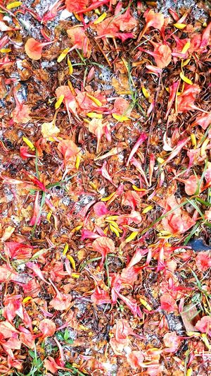 Multi Colored No People Day Close-up Outdoors Abstract Textured  Florida Nature Boca Grand Island Leaves Flowers & Pedels