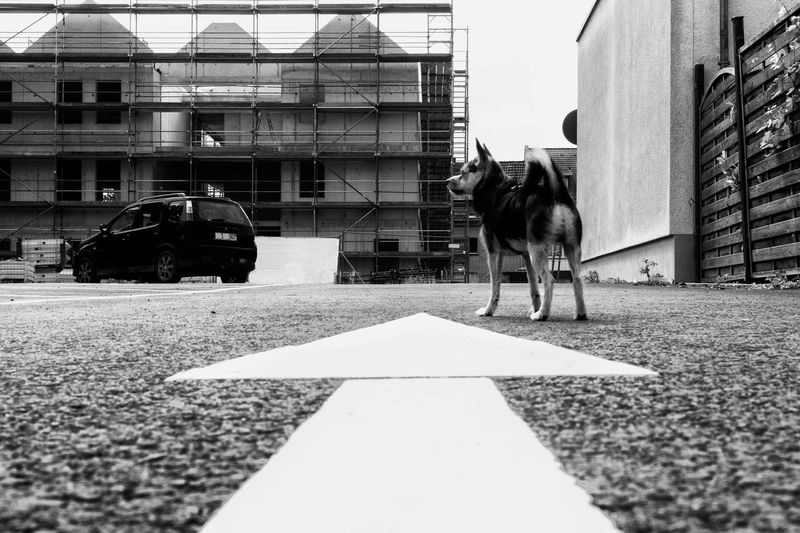 Surface Level Of Dog By Arrow Symbol On Road