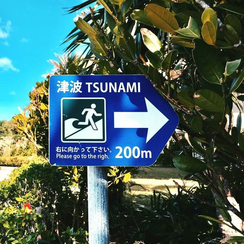 Mix Yourself A Good Time Guidance Communication Road Sign Text Blue Direction Day Tree Leaf Low Angle View Growth Outdoors No People Plant Nature Close-up OKINAWA, JAPAN Tsunami Your Ticket To Europe