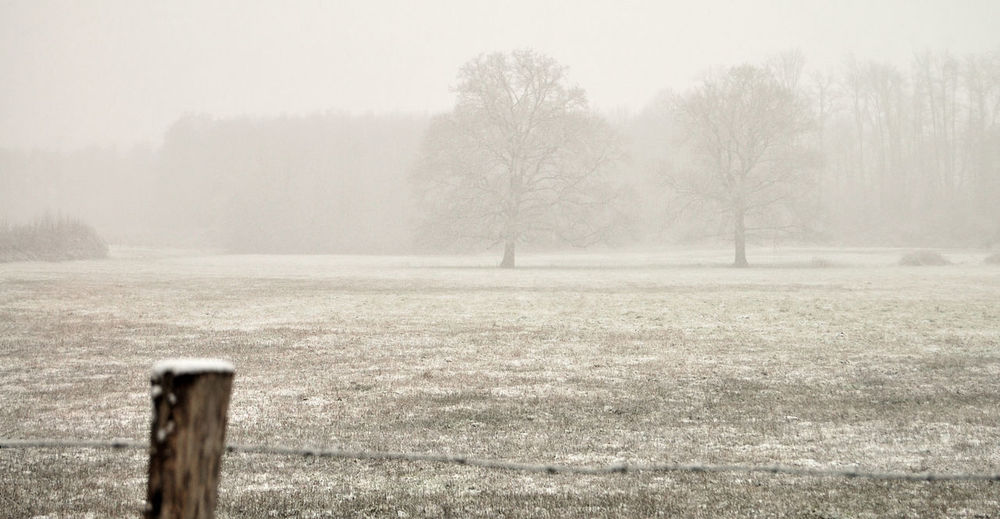 Arbres Bare Tree Beauty In Nature Campagne Champ Cloture Cold Temperature Fog Grass Hiver Igersyonne Landscape Nature Tranquil Scene Tranquility Tree Weather Winter