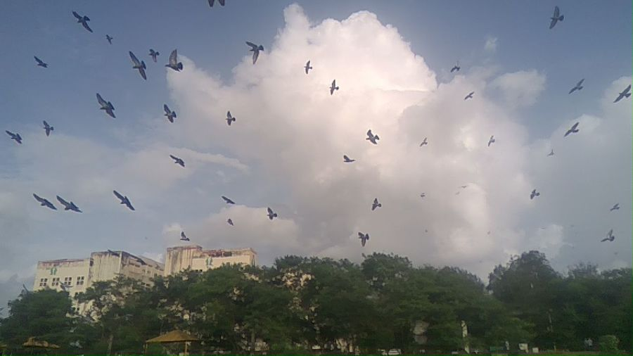 Birds Animal Wildlife Bird Flying Animals In The Wild Flock Of Birds Large Group Of Animals Outdoors Sky Tree Animal Themes Day No People Spread Wings Vulture Nature