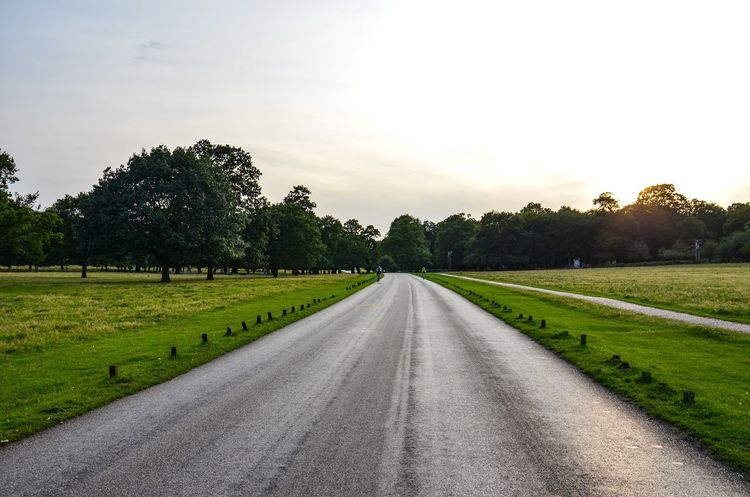 On the Road Tree Tranquil Scene The Way Forward Nature Tranquility Landscape Road Beauty In Nature Grass Scenics Sky Day Outdoors Growth Street Road Trip Nature Way Ahead Ahead Take A Drive Drive Asphalt England Richmond Park, London Postcode Postcards