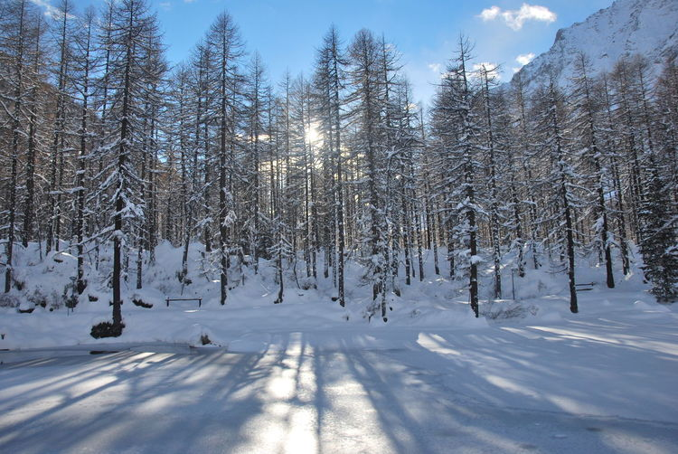 Aosta Luci Neve Day Light And Shadow Sky Snow Trhee And Sky Valle D'aosta Valley White