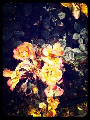 Lindaaas :3 Flower Lindas! Megustan Hermosas