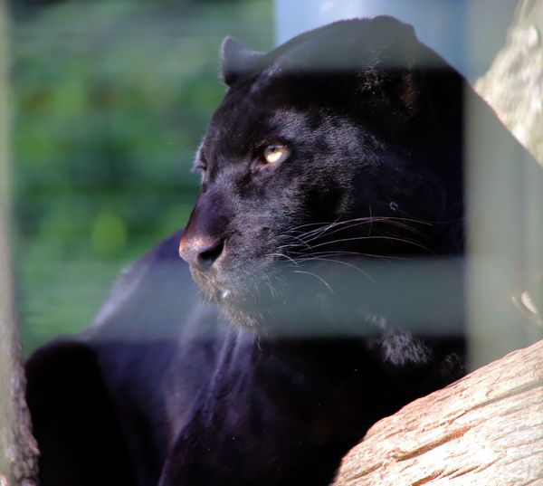Close-up of black looking away