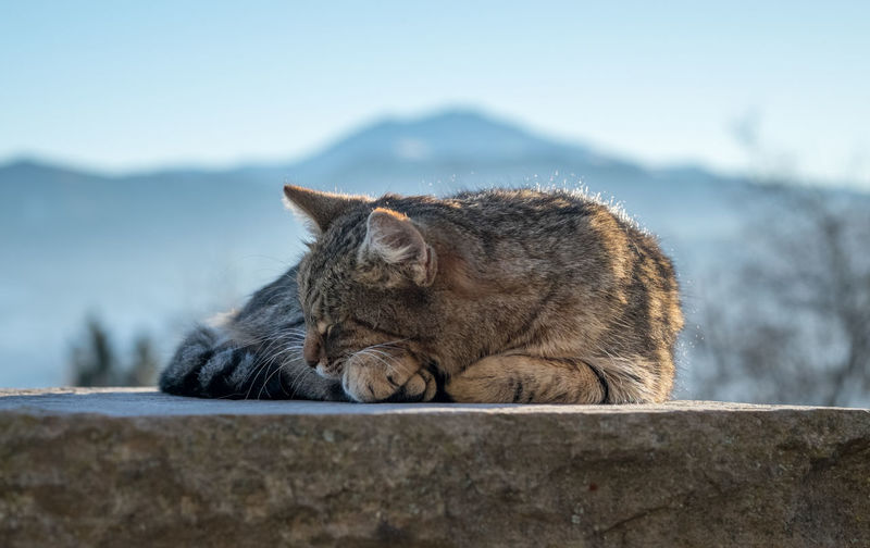 Cat Relaxing On Retaining Wall Against Sky