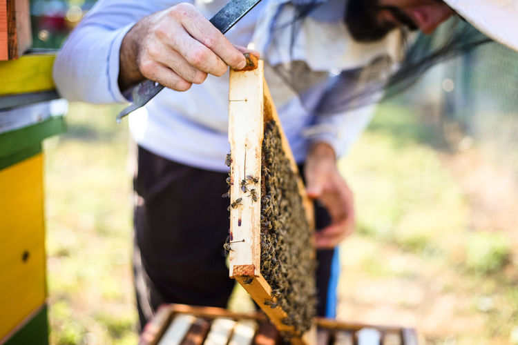 Close-up of man holding bee hive at farm