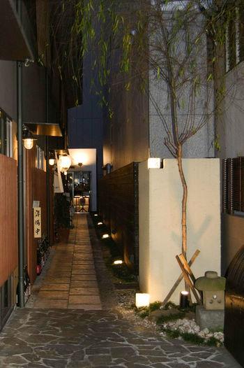 Nightlife Japan
