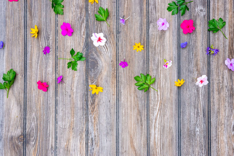 High angle view of pink flowering plants on wood