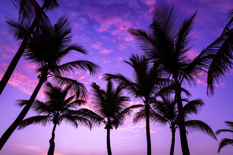 Low angle view of coconut palm trees against romantic sky
