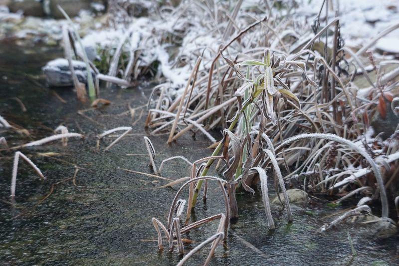 Winter Cold Temperature Snow Plant Frozen No People Tree
