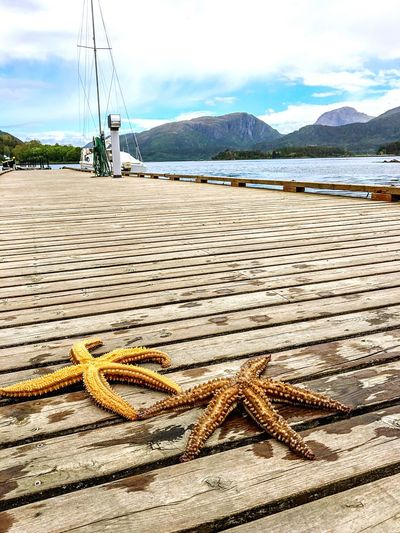 Not all stars belong to the sky ⭐️#starfish #bridge #mountains