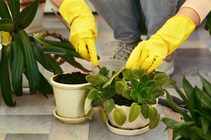 Close-up of potted plants on flooring