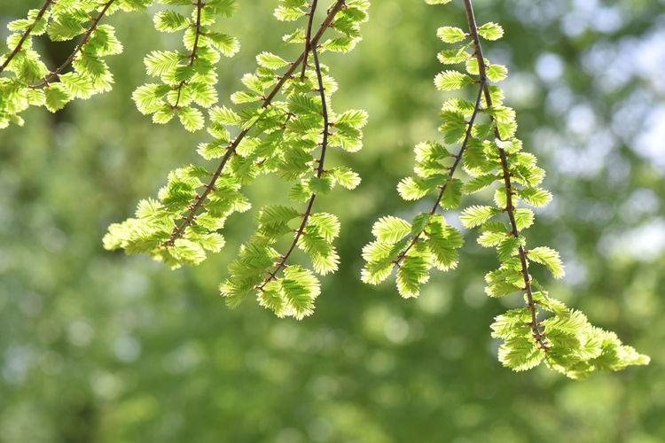 Verdure Spring