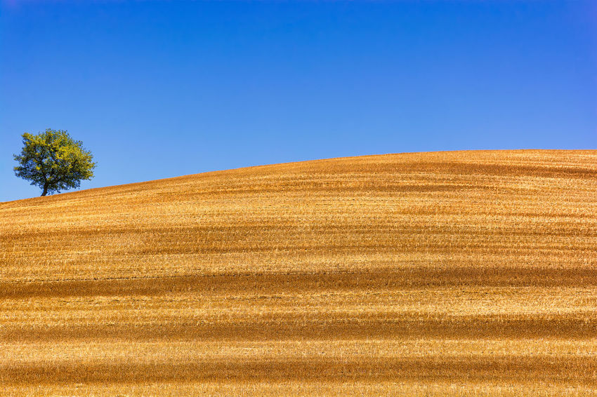 The golden fields of Provence Agriculture Beauty In Nature Blue Lonely Clear Sky Contrast Day Farm Field Golden Harvest Landscape Nature No People Outdoors Provence Rural Scene Scenics Single Tree Landscape Sky Summer Tree Wheat Field Yellow Sommergefühle