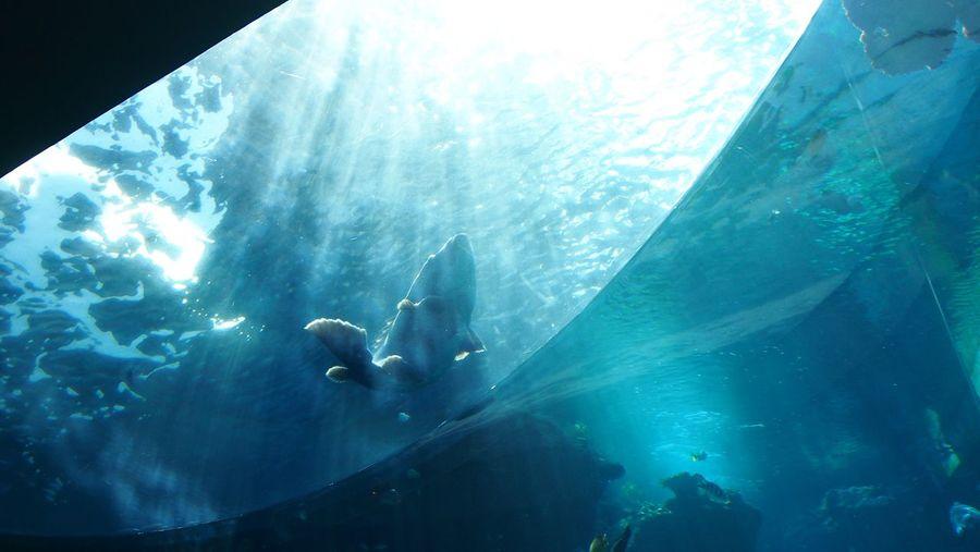 Check This Out Hello World Blue Fish Water Sunshine Makes Everything Better Churaumi Aquarium Okinawa Jump Underwater Essence Of Summer