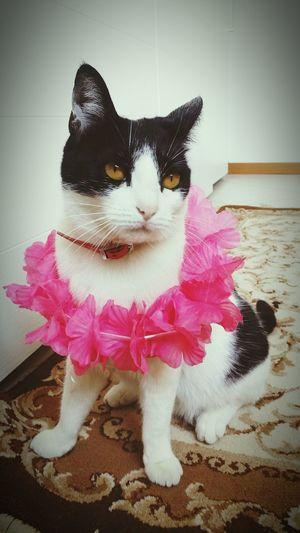 La mia gatta