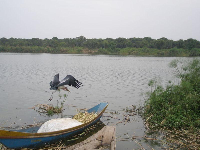 Animal Themes Animal Wildlife Animals In The Wild Beauty In Nature Bird Boat Day Lake Marabu Nature No People One Animal Ouganda Outdoors Tree Uganda  Water The Great Outdoors - 2018 EyeEm Awards