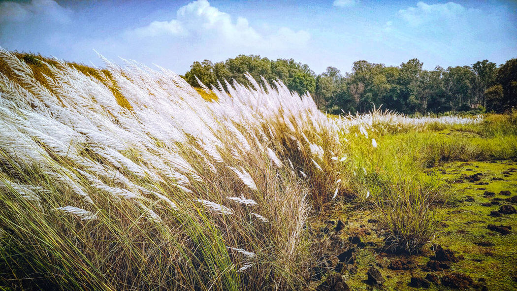 Field Photography Naturevscity