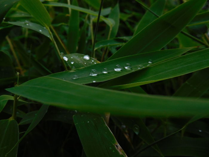 Beauty In Nature Blade Of Grass Close-up Day Dew Drop Focus On Foreground Freshness Grass Green Color Growth Leaf Nature No People Outdoors Plant Plant Part Purity Rain RainDrop Tranquility Water Wet