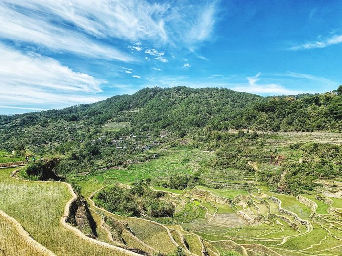 Philippines Nature Rice Paddy Hiker Agriculture Tea Crop Tree Sky Cloud - Sky Landscape Agricultural Field Rice - Cereal Plant Terraced Field