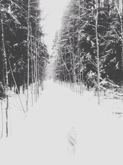 Road passing through bare trees