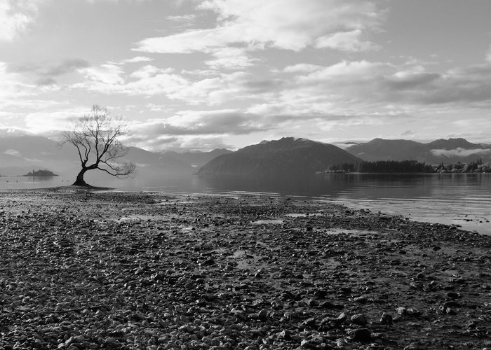 lone tree Black And White Landscape Lone Tree Beauty In Nature Blue Feelings Cloud - Sky Day Lake Landscape Lonley Mountain Nature No People Outdoors Scenics Sky Tranquil Scene Tranquility Tree Wanaka New Zealand Water First Eyeem Photo