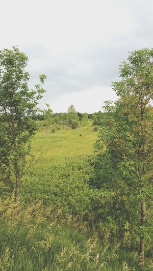 \\ walk on a trail// Nature Trail